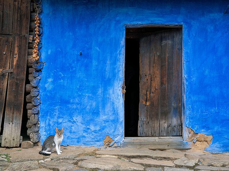 Courtyard Cat Sibiu, Romania