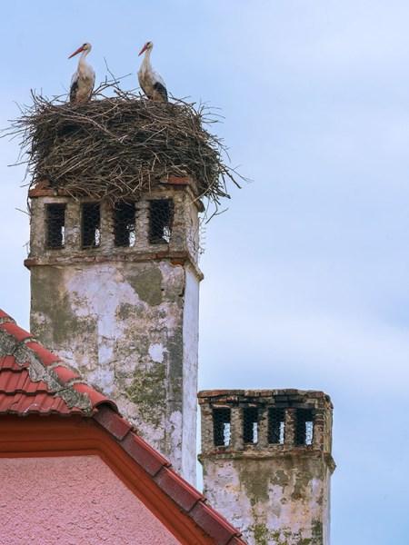 Stork Pair