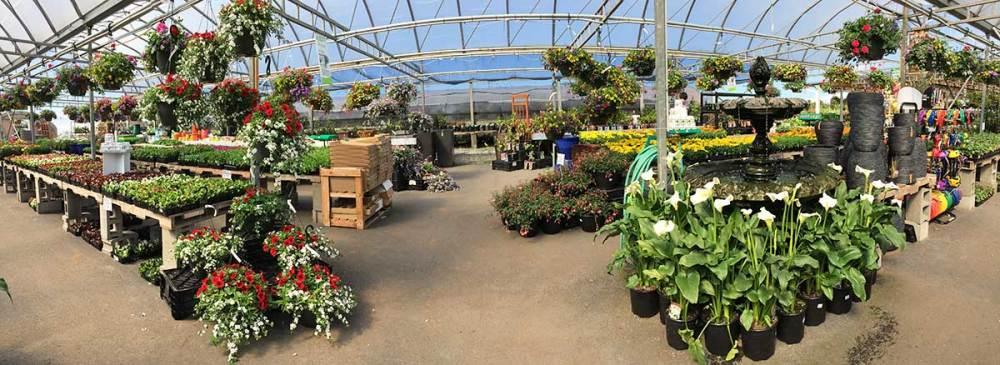 harris nurseryland garden centre ladner delta