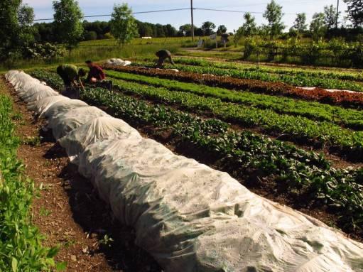 small farms 4