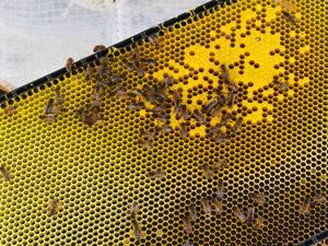Bee-Stills-2