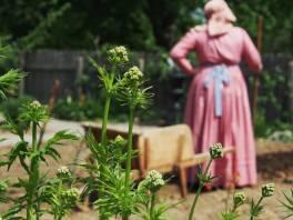 Victorian Garden Album 20