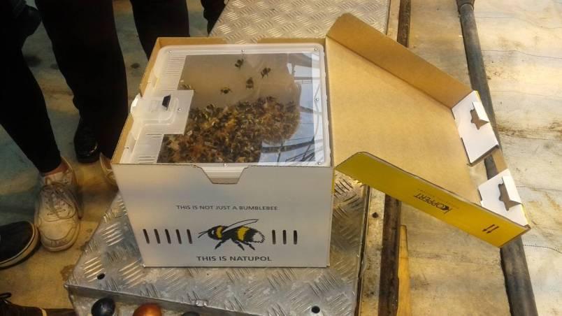 Iceland - bee box