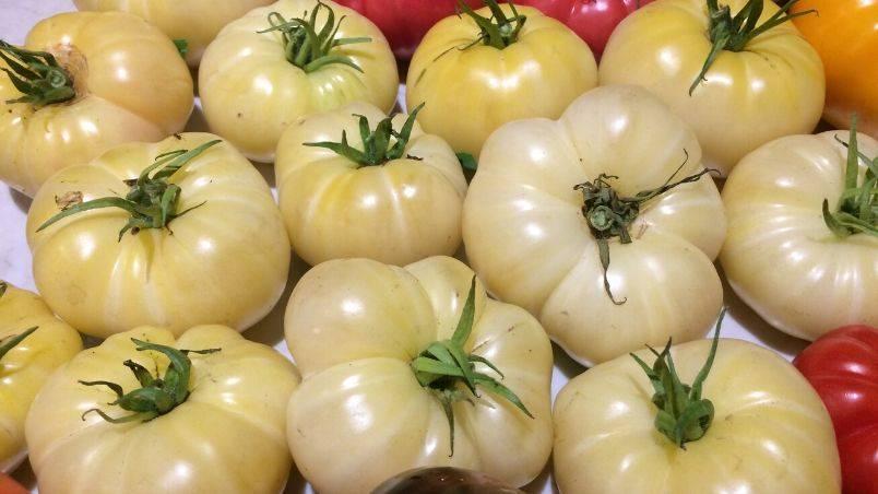 White tomato