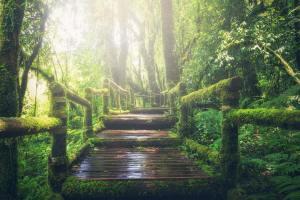 HarryDijkshoorn.com - Somatic Experiencing - spiritual counselling - qigong healing
