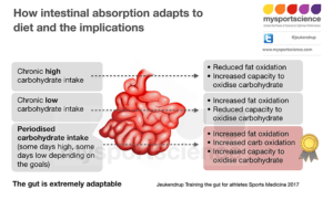 darmen absorptie dieet