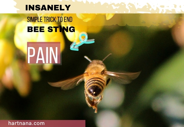 Insanely Effective Simple Trick To End Bee Sting Pain