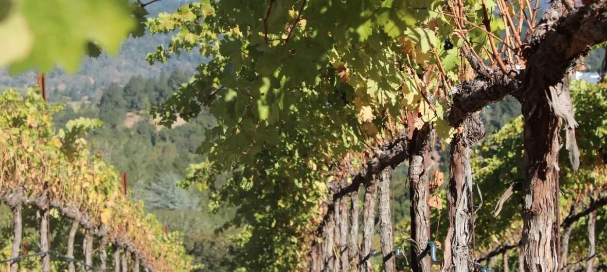 wijngaard terroir