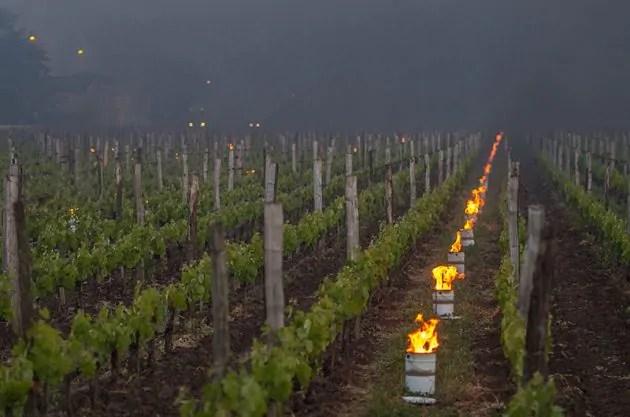 wijngaard klimaat grensrechter