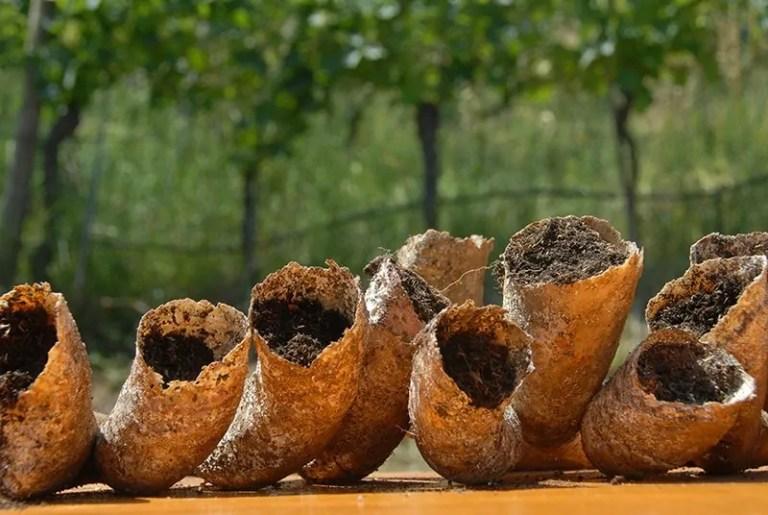 biodynamische wijn