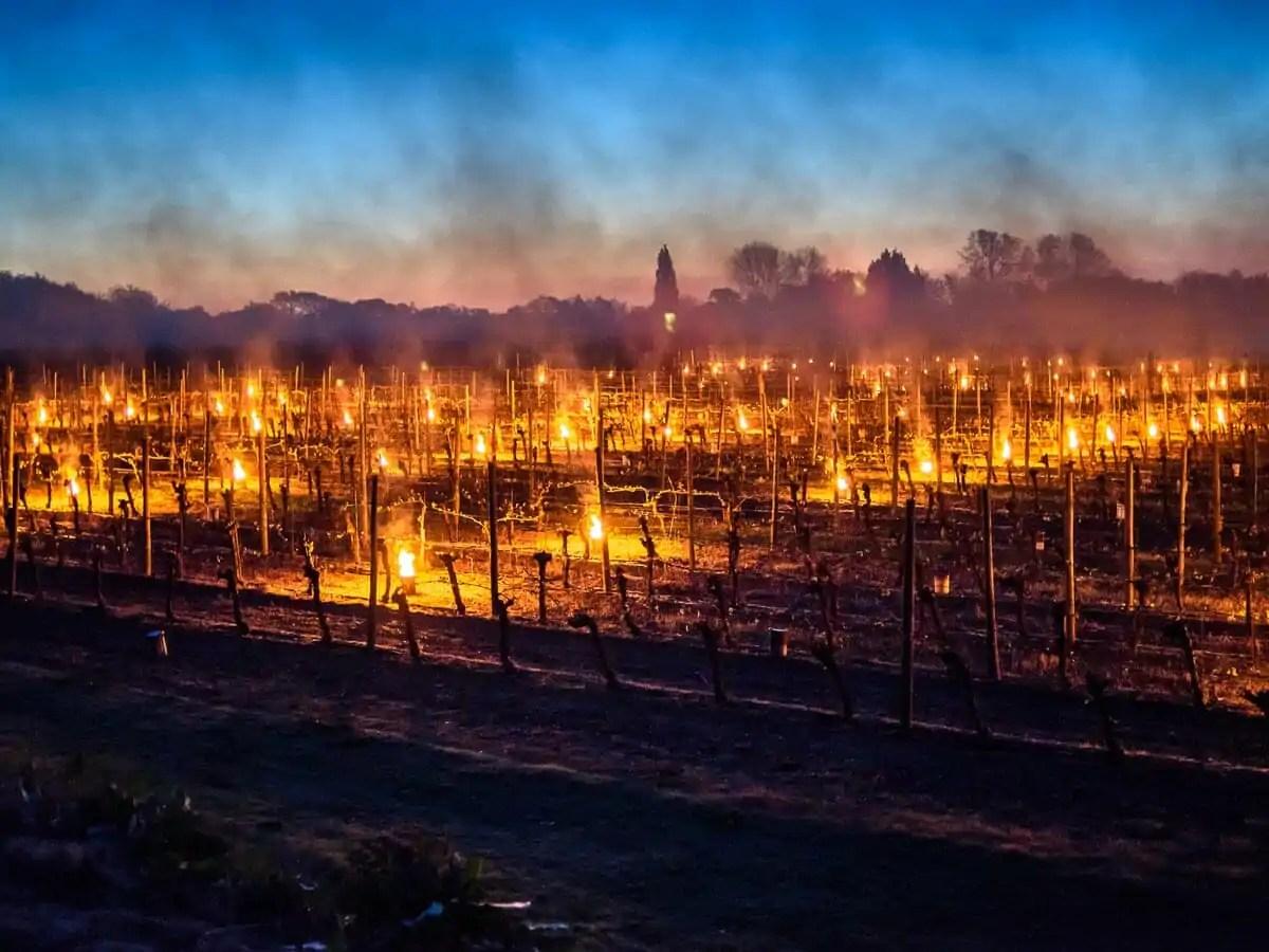 wijngebieden voorjaarsvorst schade