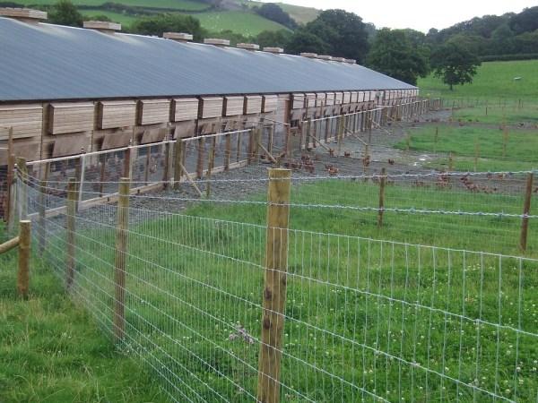 Poultry net fence