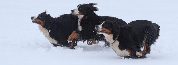 Hundeparadies Harz ©Brigitte Lind