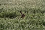 Kaninchenstall XXL kaufen und Hasenstall XXL klaufen - Deine Kaninchen und Hasen brauchen viel Platz und Bewegungsfreiheit. Das ist beim großen kaninchenstall zu beachten.