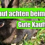 Kaninchenstall kaufen | Darauf achten beim Kauf eines Kaninchenstalls!