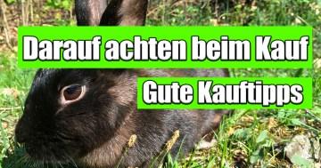Kaninchenstall kaufen - Darauf achten beim kauf eines Kaninchenstalls und Hasenstalls. das ist wichtig beim Kauf - Kauftipps.