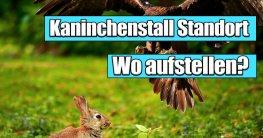 Kaninchenstall Standort - Wo Kaninchenstall aufstellen, zum Schutz vor fremden Tieren und ein gutes Wohlbefinden.