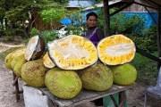 ثمرة (شجرة الخبز) تحلّ مشكلة الجوع في العالم!