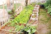 ''كن صديقا للبيئة'': مبادرة لزرع وتزيين أسطح البيوت.... في منطقة القصر بالكرك