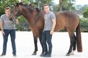 Staller منصة جديدة لتأجير إسطبلات الخيول على الإنترنت على غرار Airbnb