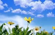 طقس ربيعي معتدل بأغلب المناطق السبت والأحد
