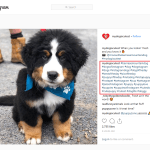 Dog Hashtags To Copy And Paste On Instagram To Make Your Dog Famous Already
