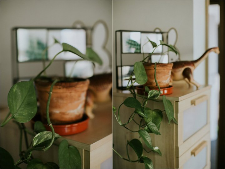 Planten koorts en groene vingers