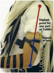 The highest point for any part of the tefillin shel yad.