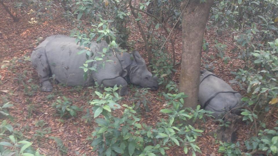 chitwan, la proxima vez me pongo un documental, nepal, chitwan nepal, selva, rinocerontes, rinocerontes chitwan, selva nepal