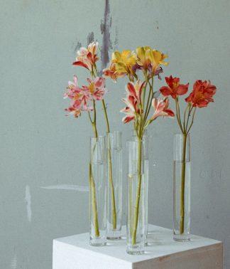 Seasonal Single Stems | That Flower Shop