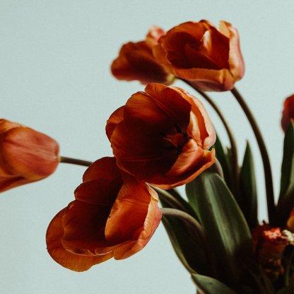 Natural Selection   That Flower Shop   Seasonal flowers, bouquets and arrangements