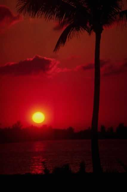 Florida sunset with palm tree