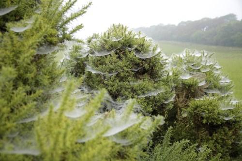 spider-webs-1416842_1920