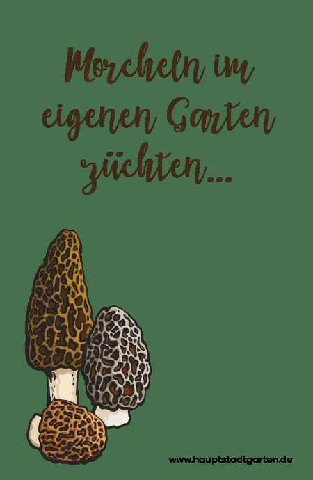 Morcheln im Garten anbauen