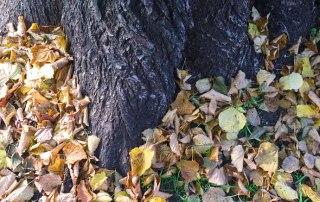 Wie mache ich meinen Garten winterfest? 5 tolle Tipps + Checkliste zum Download.