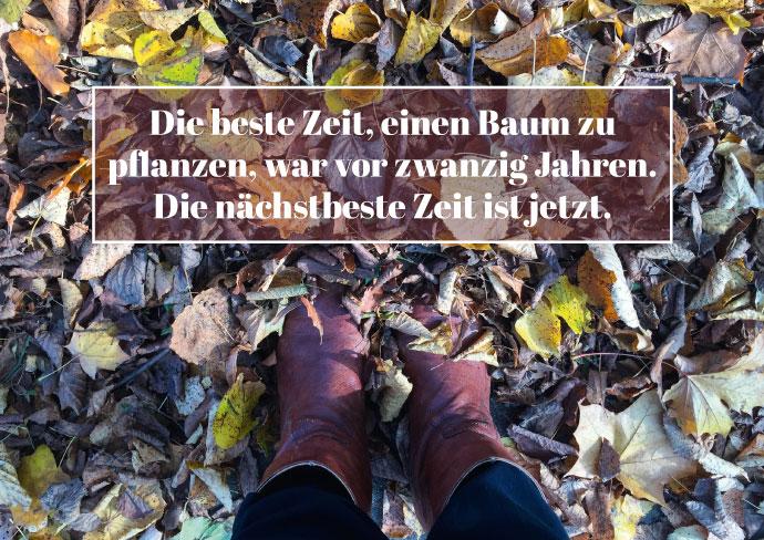 Willkommen auf meinem Gartenblog - hier dreht sich alles um harten, Balkon, DIY, Obst, Gemüse, Pflanzen, Schrebrgarten, Kleingarten und Laube.
