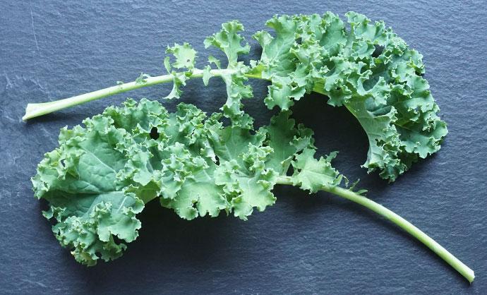 Pflanzenportrait Grünkohl – holt Euch Vitamine für den Winter ins Beet