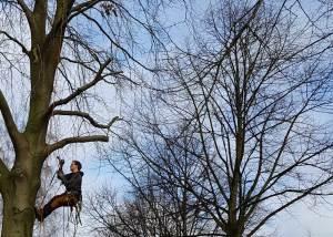 Baumpflege mit Seilklettertechnik