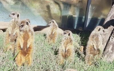 HAUS AKTIV im schönsten Tiergarten der Welt!