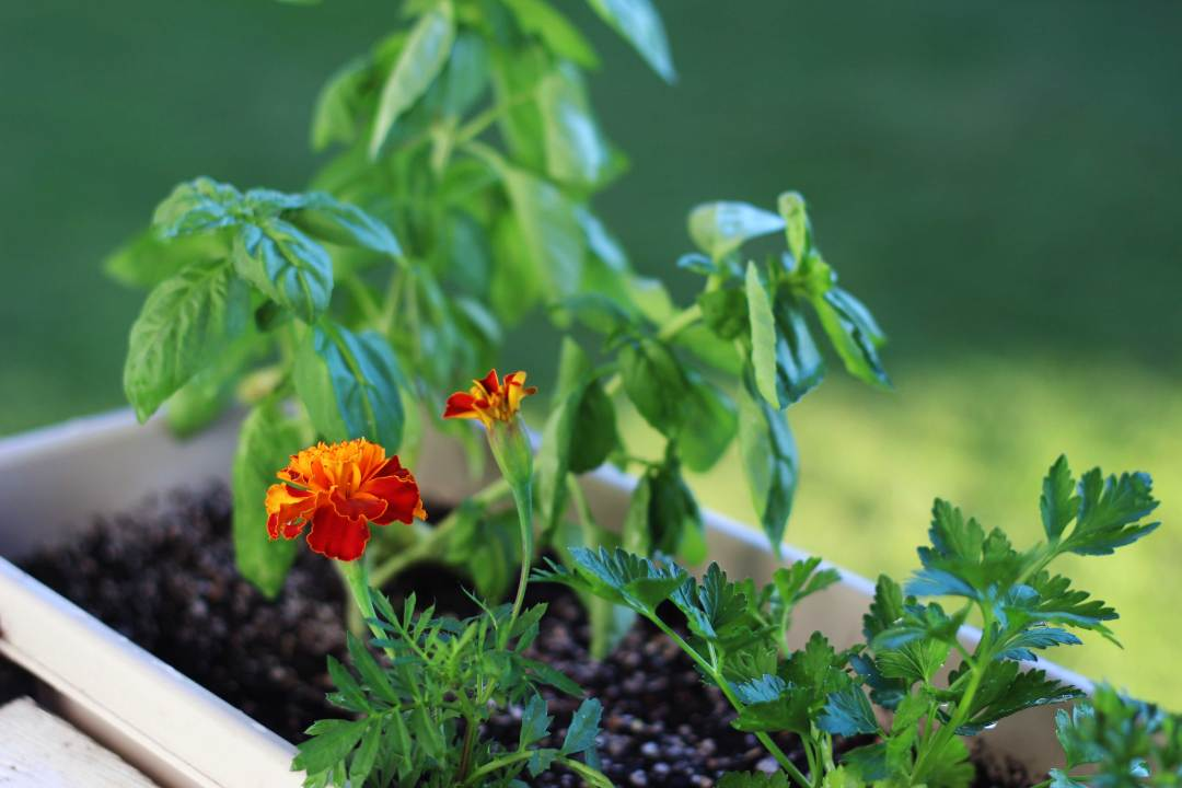 Kitchen-DIY-Herb-Box