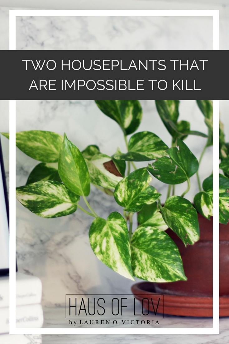 TWO HOUSEPLANTS THAT ARE IMPOSSIBLE TO KILL