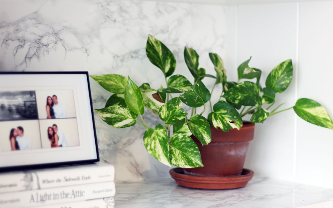 Two Houseplants That Are Impossible to Kill (Honest)