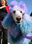 haute dog howloween parade long beach justin rudd halloween
