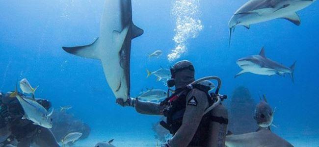 Köpekbalıklarının arasına daldı ve...