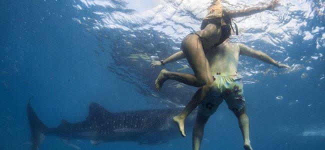 Hawaii'de Köpekbalığı Faciası!