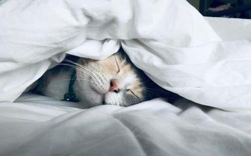 een goede nachtrust bevordert je immuniteit