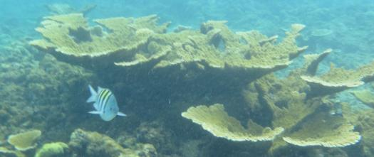 Unterwasserwelt am Korallenstrand (Playa Coral) nahe Varadero