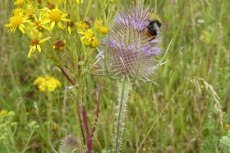 POLLINATOR: Friends of the Earth has created a leaflet explaining how people can help bees and other animals.