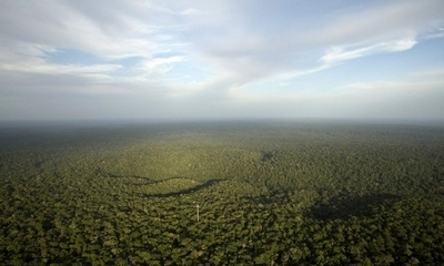 view from the Amazon Tall Tower Observatory