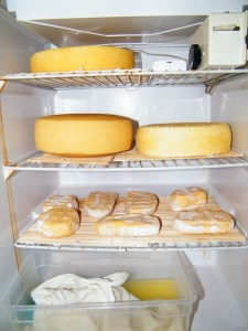 Ripening cheeses in the fridge